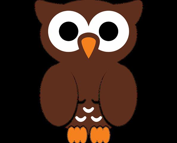 K-1 OWL Program