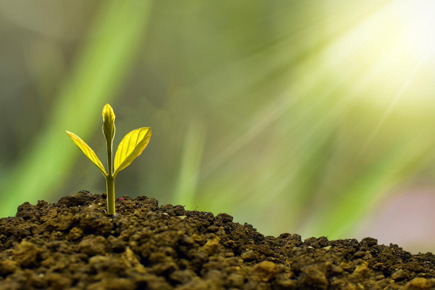 Hope Grows Here: Stewardship 2021